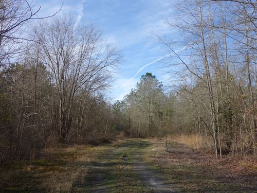 13.71 Acres, Lee County, Sc : Bishopville : Lee County : South Carolina