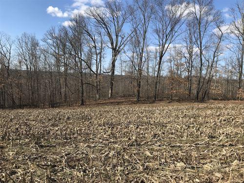 Patton Mills Rd - 13 Acres : Stockport : Washington County : Ohio