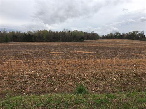 Prime Row Crop : Lavinia : Carroll County : Tennessee