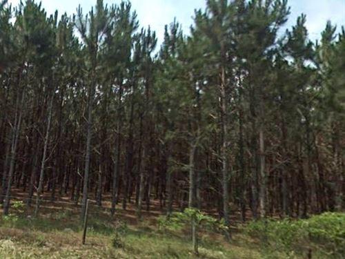 Suwannee County, Fl $18,000 Neg : Live Oak : Suwannee County : Florida