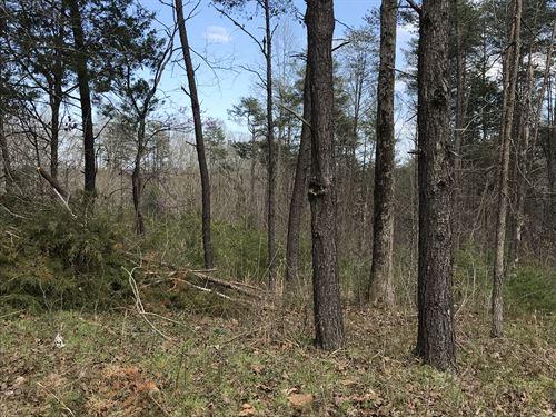 10 Acres In Cub Run Ky : Cub Run : Hart County : Kentucky