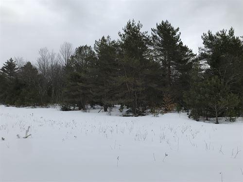 Adirondack Foothills : Forestport : New York County : New York