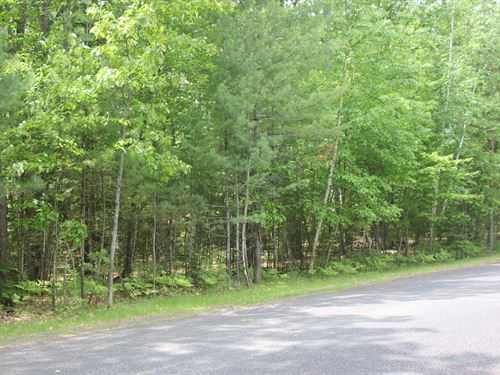 3 Acres Of Prime Woods : St Germain : Vilas County : Wisconsin