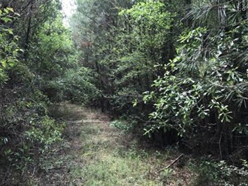 16+/- Acres In Clarke County, Ms : Shubuta : Clarke County : Mississippi