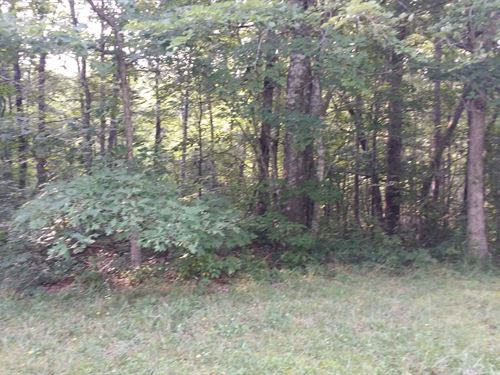 .99Ac In Cumberland Cove, Tn : Monterey : Cumberland County : Tennessee