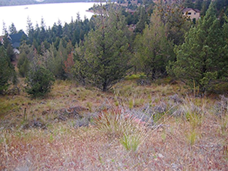Lot Overlooking Lake Shastina : Weed : Siskiyou County : California