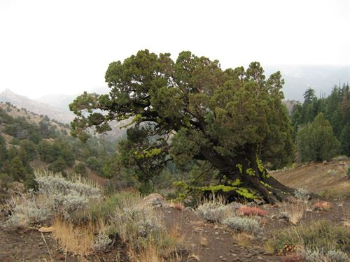 .98 Acre Parcel In Modoc County, Ca : Alturas : Modoc County : California
