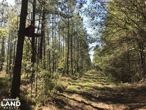 Ridgeville Home Site 6.5 Acres : Ridgeville : Dorchester County : South Carolina