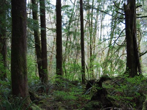 Berryman Creek Homesite : Hoquiam : Grays Harbor County : Washington