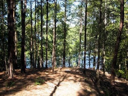 Best Value Simply Gorgeous Lot #10 : Bankhead Lake : Walker County : Alabama