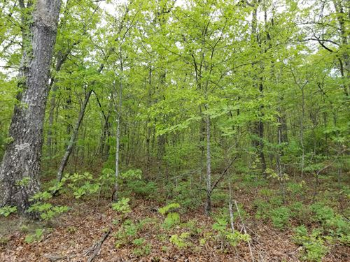 2.49+/-Acres Wooded Near Monteagle : Monteagle : Grundy County : Tennessee