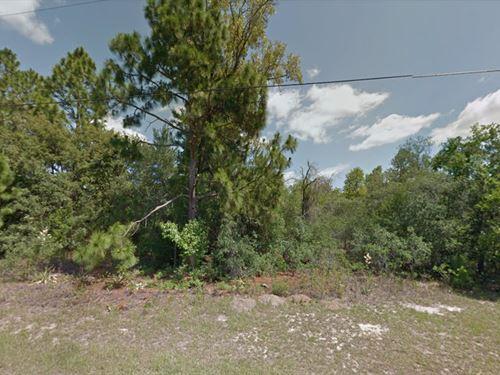 Citrus County, Fl $20,000 : Citrus Springs : Citrus County : Florida