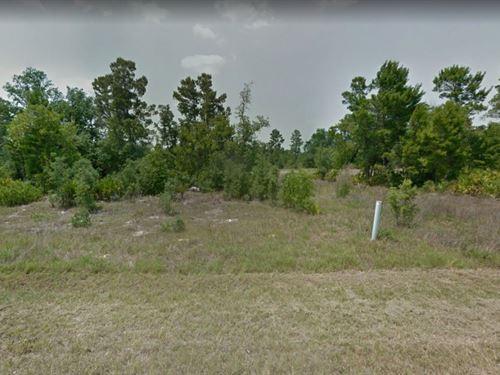 .3 Acres In Poinciana, FL : Poinciana : Polk County : Florida