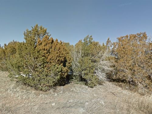 Torrance County, Nm $45,000 Neg : Torrance : New Mexico