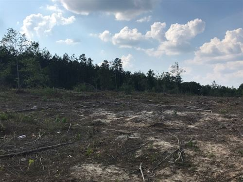 12 Acres Holloway Road Prentiss, Ms : Prentiss : Jefferson Davis County : Mississippi