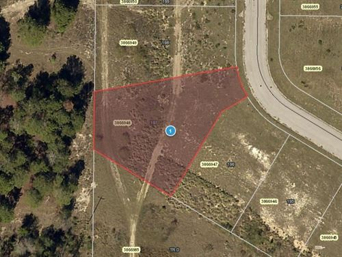 .34 Acres In Mascotte, FL : Mascotte : Lake County : Florida