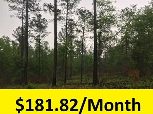 Beautiful Wooded Lot : Hephzibah : Burke County : Georgia