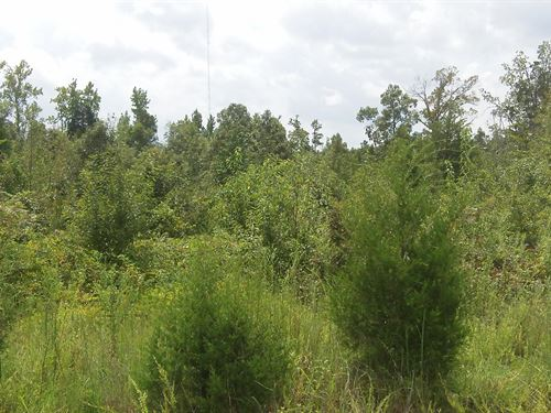 Sawmill Farms - 3.75 Acre Lot : Gray Court : Laurens County : South Carolina