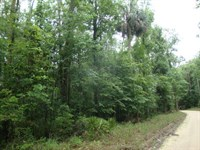13.9 Acres Great For Hunting 775815 : Inglis : Levy County : Florida