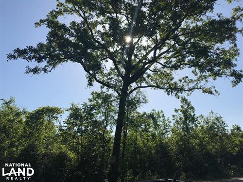 Berkeley Home Site : Alvin : Berkeley County : South Carolina
