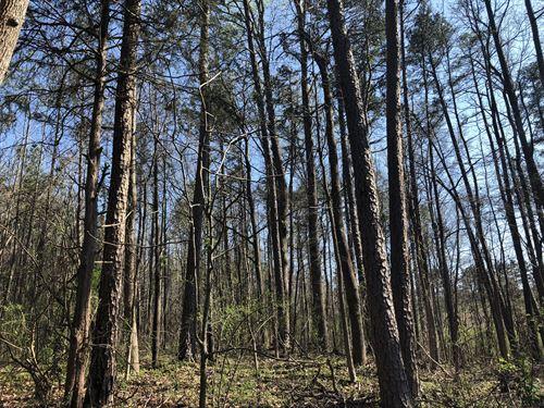 Creek, Wooded, Private : Fair Play : Oconee County : South Carolina