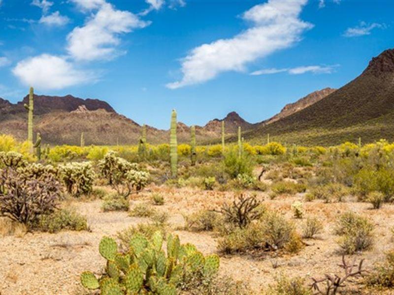 1 Acres In Willcox, AZ : Willcox : Cochise County : Arizona