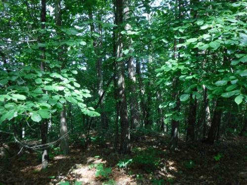 15 Ac, Views, Wooded, Easy Access : Whitleyville : Clay County : Tennessee