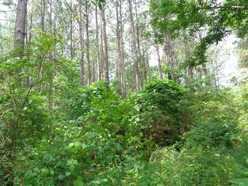 Heavily Wooded 17 Acre Tract in MO : Mount Andrew : Barbour County : Alabama