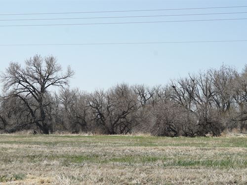 7 Acres On The South Platte : Kersey : Weld County : Colorado