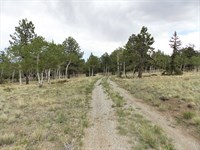 Trout Creek Pass, Camp Or Build Si : Hartsel : Park County : Colorado