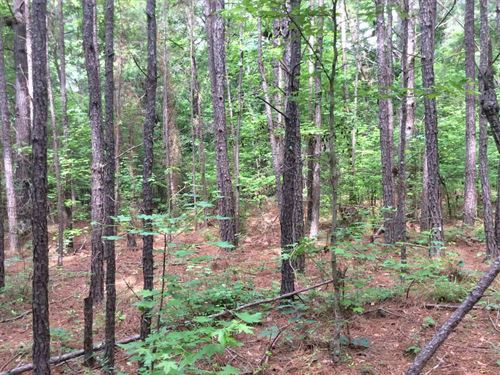 Pine Trail Tract : Evergreen : Conecuh County : Alabama