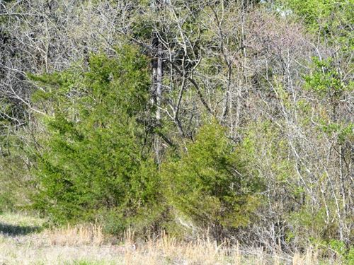 1.29 Acres In Protem, AR : Protem : Boone County : Arkansas