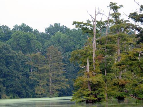 .32 Acres In Pine City, AR : Pine City : Monroe County : Arkansas