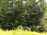 1.57 Acre Home Site In Blacksburg : Blacksburg : Cherokee County : South Carolina