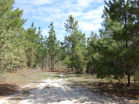 5.2 Acres (a-288) : Archer : Alachua County : Florida