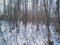 2.82 Acres Heavily Treed Residenti : Nikiski : Kenai Peninsula Borough : Alaska