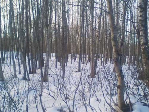 2.82 Acres Heavily Treed Residenti : Nikiski : Kenai Peninsula Borough : Alaska