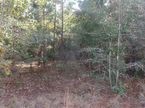 11.4 Ac Pine Timberland Tract : Leesville : Vernon Parish : Louisiana