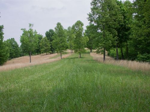 Laurel Ridge Tract 2 5.09 Acres : Liberty : Casey County : Kentucky