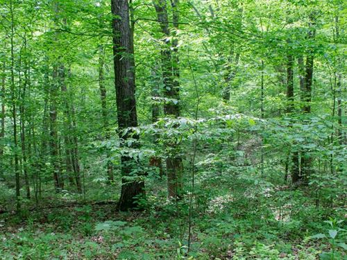 Laurel Ridge Tract 3 5.06 Acres : Liberty : Casey County : Kentucky