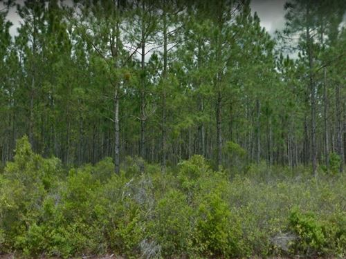 1.16 Acres In Hawthorne, FL : Hawthorne : Alachua County : Florida