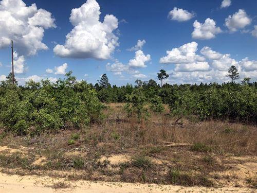 Marlboro County Sc Hunting Land : Bennettsville : Marlboro County : South Carolina
