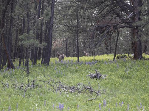 Flatwillow Creek Cabin Site : Grass Range : Fergus County : Montana