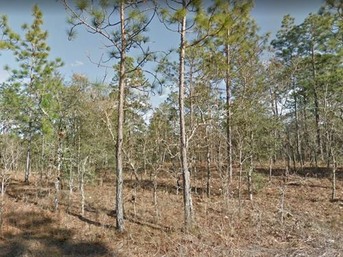 Levy County, Fl $28,000 : Morriston : Levy County : Florida