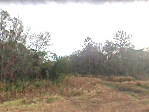 Country Investment/Recreation Land : Bunnell : Flagler County : Florida