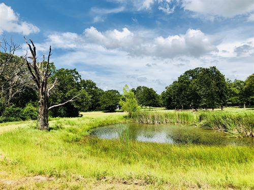 Perfect 5.5 Acre Wooded Tract : Thorndale : Milam County : Texas