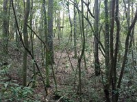 Barnes Cross Road : Ariton : Dale County : Alabama