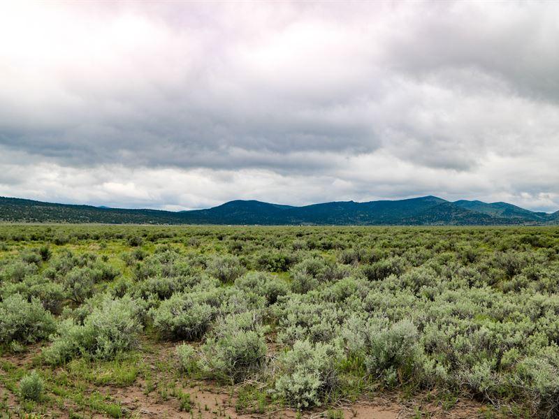 Madeline Valley Jewel : Termo : Lassen County : California