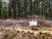 Hickory Hollow Farms, 3.16 Acre Lot : Gray Court : Laurens County : South Carolina