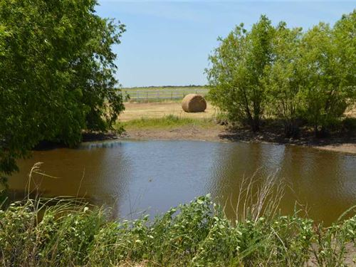 20 Acres of Ag Exempt Land For Sal : Whitesboro : Grayson County : Texas